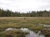 Wetland between Sunshine and Muskrat Ponds