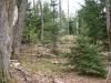 Forest near Sunshine Pond