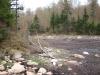 Old beaver pond northwest of Cropsey Pond