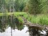 Second beaver dam