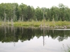 Second beaver pond