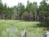 Dam in wetland northeast of lower Ripley Pond