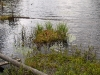 Vegetation along Crooked Lake
