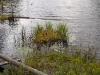 Vegetation along Crooked Lake