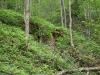 Forest on return from Gun Harbor
