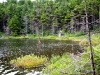 Eastern shore Crooked Lake