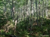 Beech forest near Streeter Fishpond