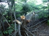 Illegally downed tree on Cat Mtn