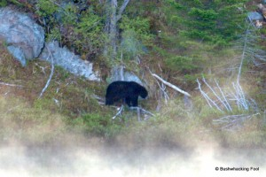 Black bear at Cropsey Pond