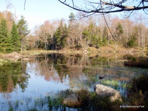Beaver pond along Cropsey Pond outlet