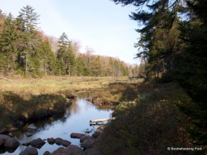 Cropsey Pond outlet stream