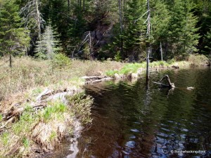 Crossed beaver dam along unnamed stream