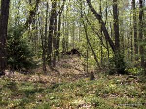 Forest near lunch spot