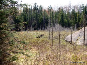 Beaver meadow along Deer Pond outlet