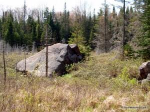 Glacial erratic at beaver meadow