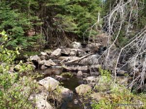 Deer Pond outlet stream