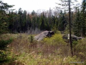 Water filtering along the Deer Pond outlet