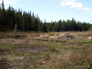 Beaver meadow west of Deer Pond