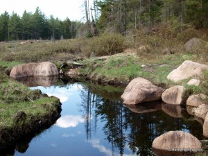 Deer Pond outlet in beaver meadow