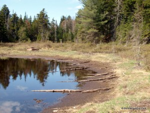Shoreline of pond in beaver meadow