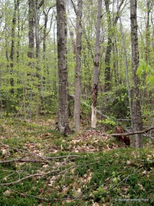 Hardwood forest southeast of Sunshine Pond
