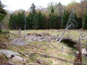 Beaver meadow near old hunters' path