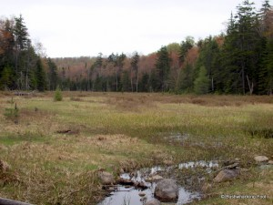 Beaver meadow near Raven Lake Rd