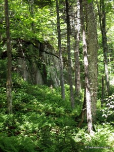 Cliffs while descending to the carpet spruce swamp