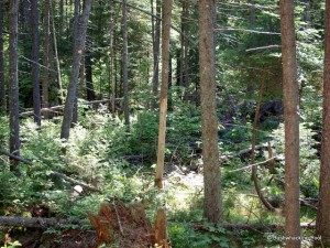 Forest surrounding campsite