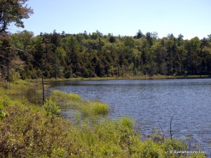 Northern shoreline of  first pond