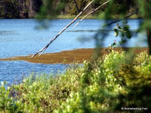 Growing bog mat on unnamed pond