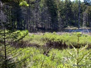Unnamed pond beaver dam