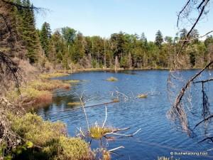 Northwestern shore of unnamed pond