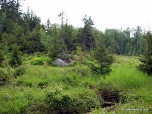 Source of Sitz Creek