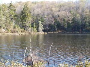 Cropsey Pond from south shore