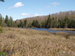 Beaver pond north of Cropsey Pond