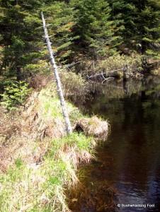Beaver dam crossing