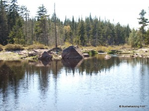 Pond in large beaver vly