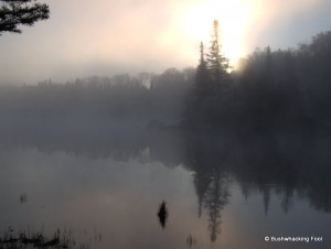 Foggy Sunshine Pond