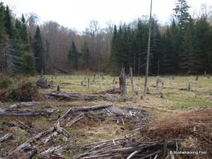 Bowtie Beaver Meadow