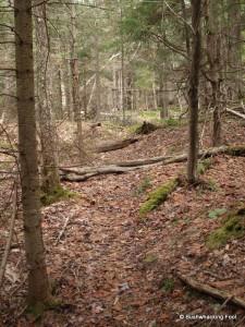 Hunters' Path