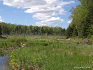 Large wetland