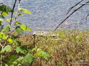 Pallet in lake