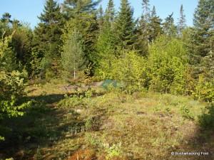 Campsite along logging road